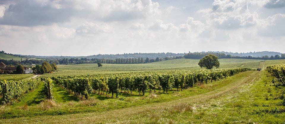 Surrey Dating - Denbies Wine Estate